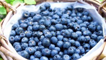 exemple de fructe otravitoare
