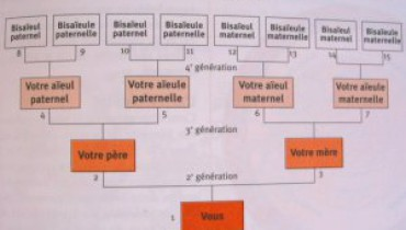 exemple de genealogie