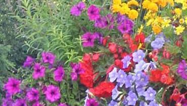 exemple de jardiniere d ete