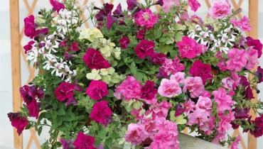 exemple de jardiniere fleurie