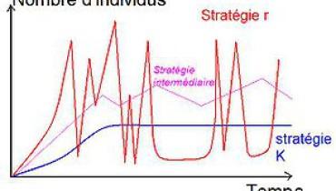 exemple de stratege r