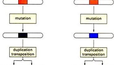 exemple de famille multigenique corrige