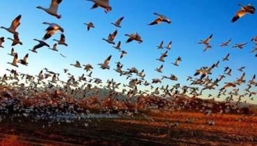 exemple de pasari care nu zboara